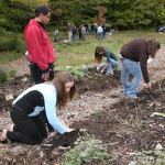Cornell EL Rose team planting butterfly garden