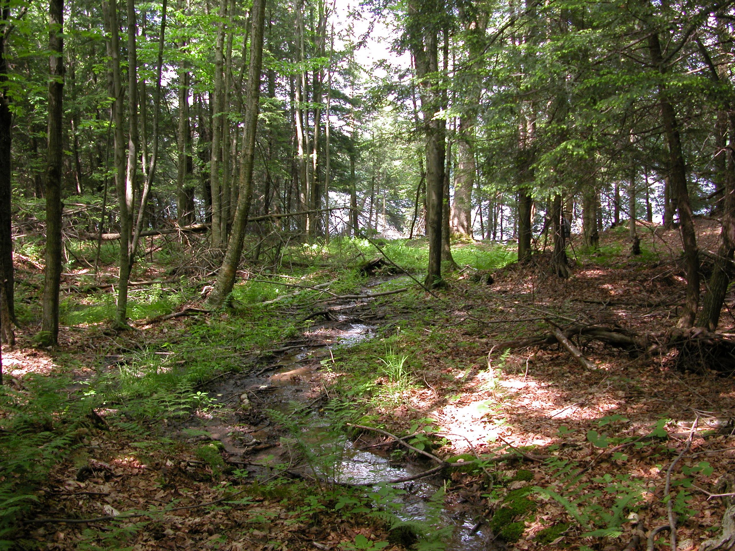 seep in woods-1